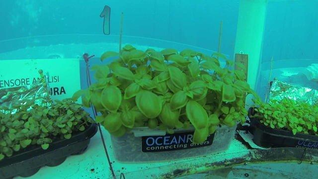 Công nghệ nhà kính trồng rau dưới đáy biển